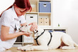 Tierärztin behandelt Hund in Tierarztpraxis