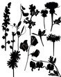Wildflowers collection vector isolated