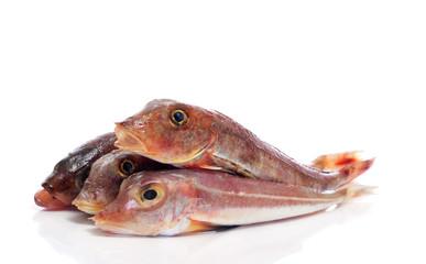 surmullets fishes