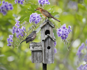 Birds On A Bird House