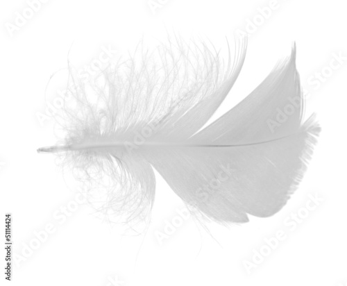 isolated single gray light feather
