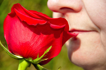 Rose et romance