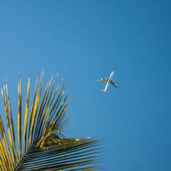 plane palm tree sky