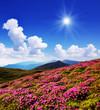 Leinwandbild Motiv Glade of pink flowers in the mountains