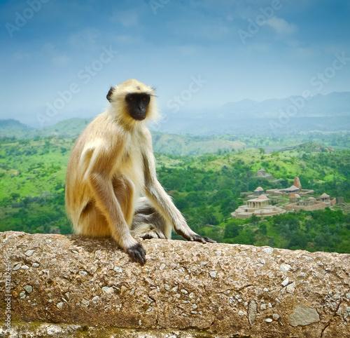Kumbhalgarh Monkey