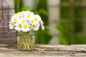 Kleiner Blumenstrauß, Gänseblümchen, Bellis perennis