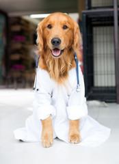 Dog as the vet