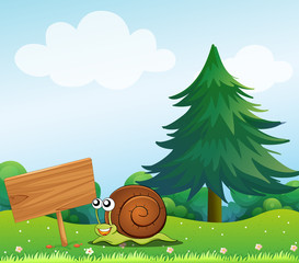 A snail near the wooden signboard
