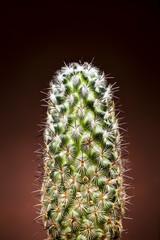 Cactus closeup vertical