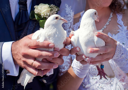 White pigeons in the hands of newlyweds
