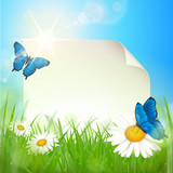Fototapety Papier - Blumenwiese, Schmetterlinge