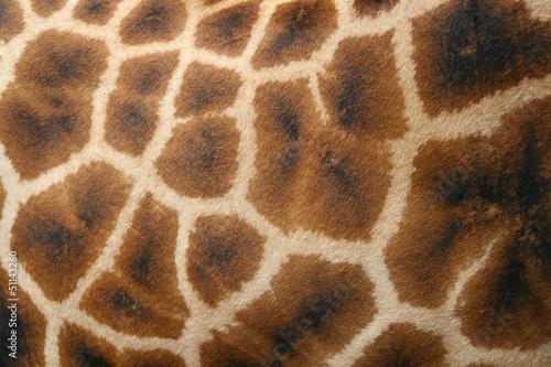 Canvas Giraffe piel de jirafa