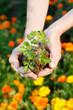 frau hält petersilienpflanze in händen