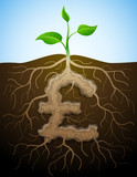 Roots and tuber in shape of pound sterling  symbol sprout