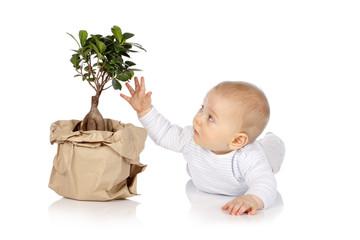 Baby greift nach kleinem Baum - Baby with little tree