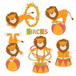 Collection of cute circus lion on white background .