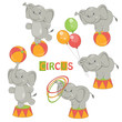 Collection of cute circus elephant on white background.