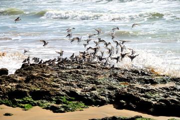 Gaviotas en la playa
