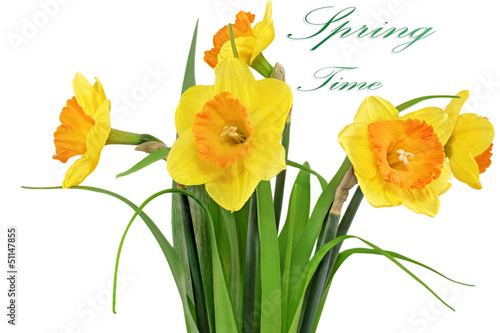 Beautiful spring flowers in vase: yellow  narcissus (Daffodil)