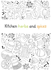 Kitchen herbs and spices doodle background