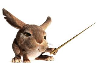 Rabbit teacher