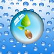 Wassertropfen Pflanze