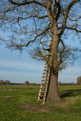Hochsitz an einem Baum