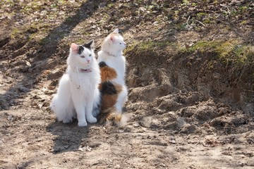 Two cats sitting on a dirt road