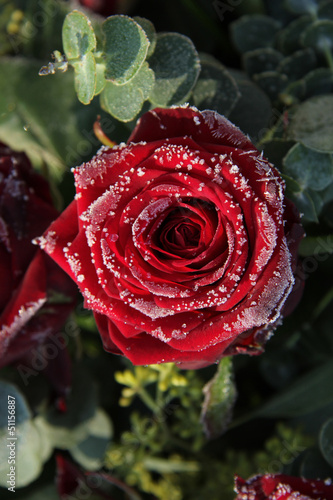 Frosted red rose © Studio Porto Sabbia