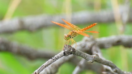 Dragonfly on the tree