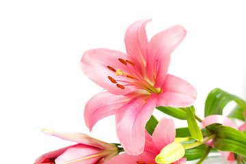 Beautiful Pink Lily Flower