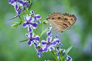 Butterfly on violet flower on green nature background
