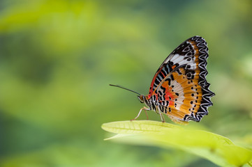 Butterfly on green nature background