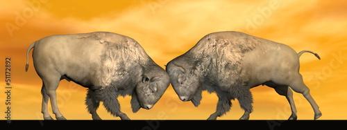 Bison fight - 3D render