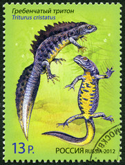 "RUSSIA - 2012: shows Crested Newt, series ""Fauna. Newts"""