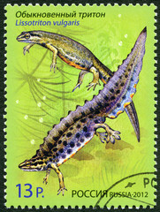 "RUSSIA - 2012: shows Smooth Newt, series ""Fauna. Newts"""