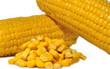 Granos de maíz.