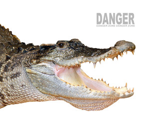 The crocodile with opened jaws.