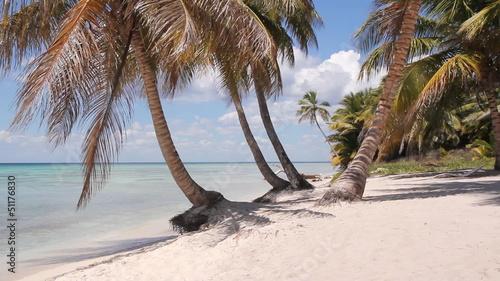 Fototapeten,strand,palme,palme,einige