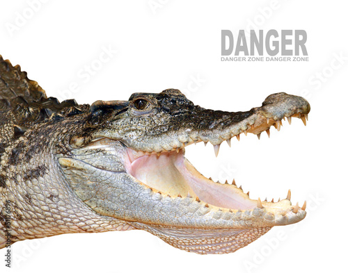 Fotobehang Krokodil The crocodile with opened jaws.