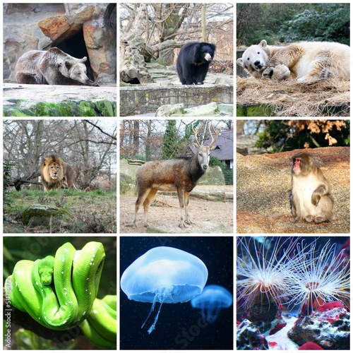 Collage of different animals in Berlin Zoo, Germany