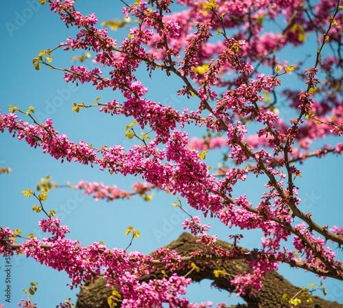Tree branch with beautiful purple flowers