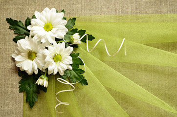 Daisies and green organza