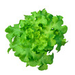 hydroponics green vegetable isolate