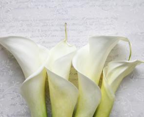 four calla lilies on textured script