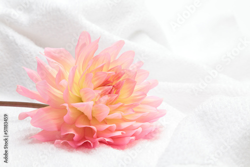 Dahlia and white towel