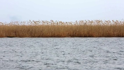 A view of the fast flowing rivers and swaying reeds