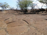 Petroglyph Carvings in Hawaii Lava Bed