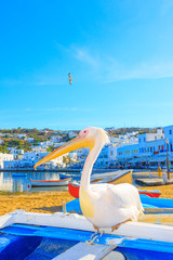 Greece, Petros famous pelican of Mykonos