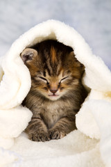 Kitten closed in towel